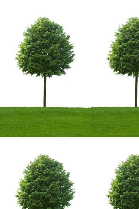 Tapeta Pixerstick Baum - Ekologie