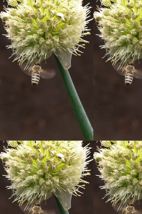 Tapeta Pixerstick Bee opylování květin - Ostatní Ostatní