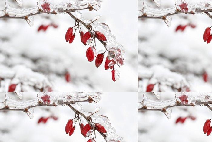 Tapeta Pixerstick Berberis větev pod těžkým sněhem a ledem. Selektivní zaměření - Roční období