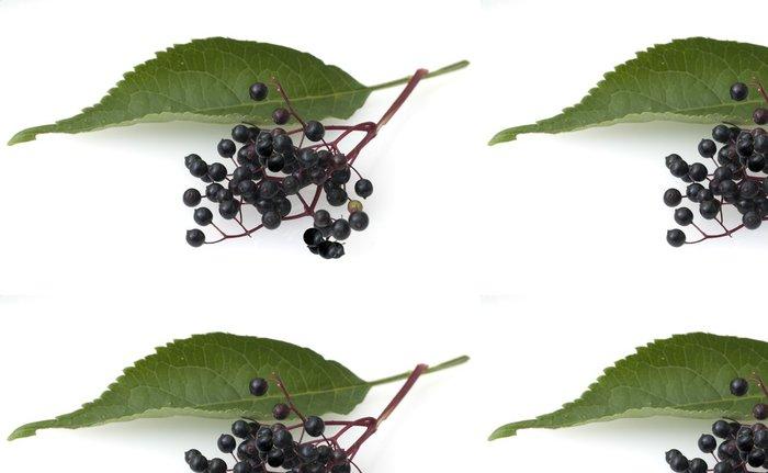 Vinylová Tapeta Bezinky, Sambucus nigra - Rostliny