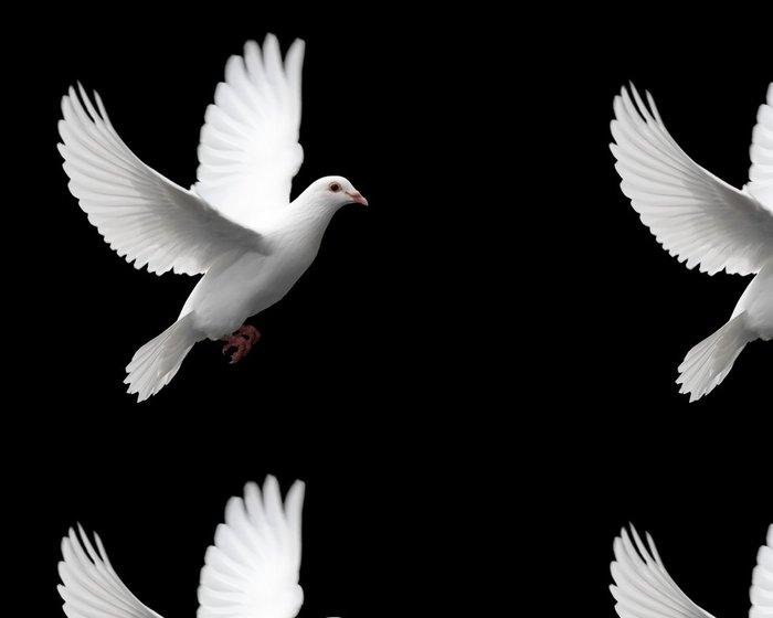 Tapeta Pixerstick Bílá holubice v letu 1 - Styly