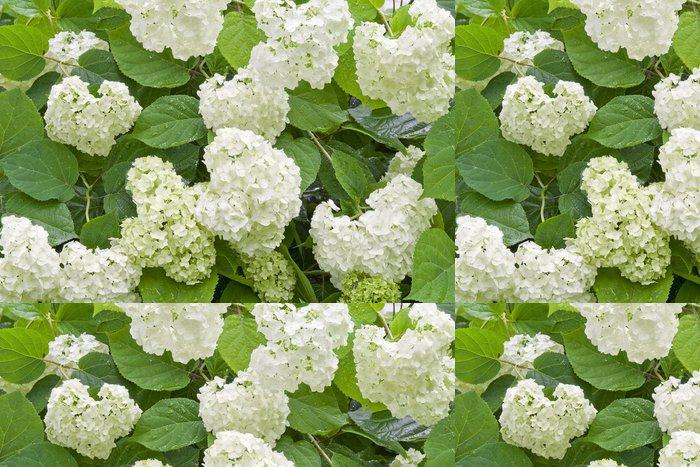 Tapeta Pixerstick Bílá hortenzie po dešti - Roční období