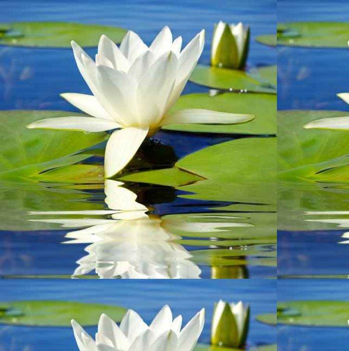Tapeta Pixerstick Bílá lilie kvetoucí jezero na pozadí zelených listů - Květiny
