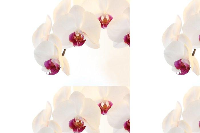 Tapeta Pixerstick Bílá orchidej (Phalaenopsis), izolovaných na bílém pozadí - Květiny