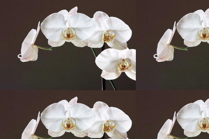 Vinylová Tapeta Bílá orchidej - Phalaenopsis květina - Témata