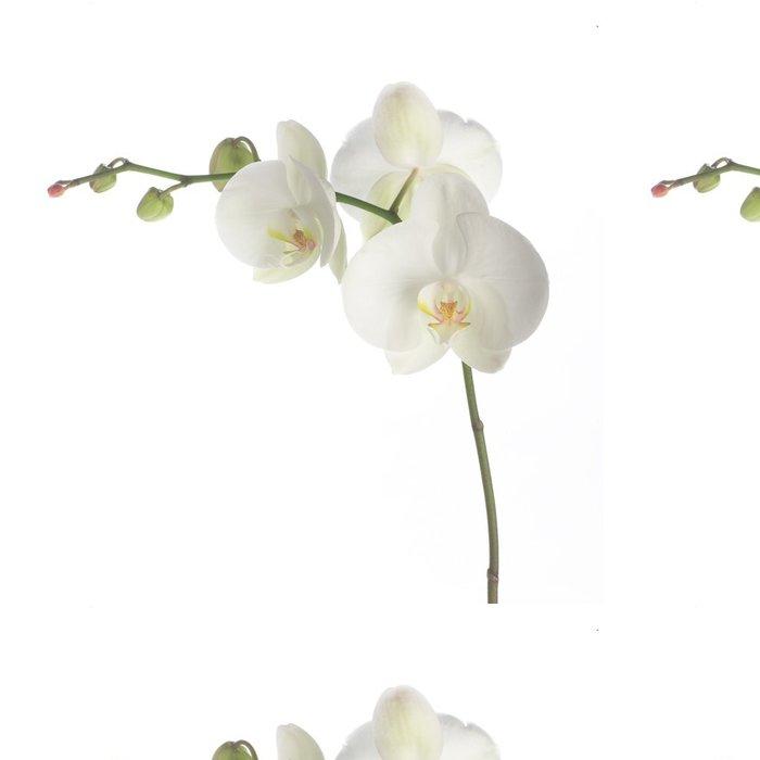 Tapeta Pixerstick Bílá orchidej - Nálepka na stěny