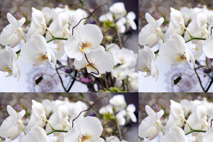 Tapeta Pixerstick Bílá orchidej - Slavnosti