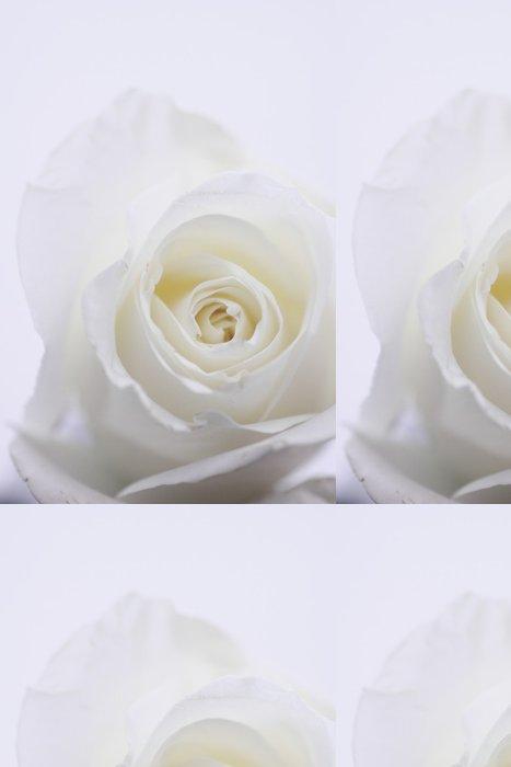 Vinylová Tapeta Bílá růže - Témata