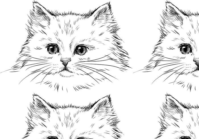 Tapeta Pixerstick Bílé kotě - Témata