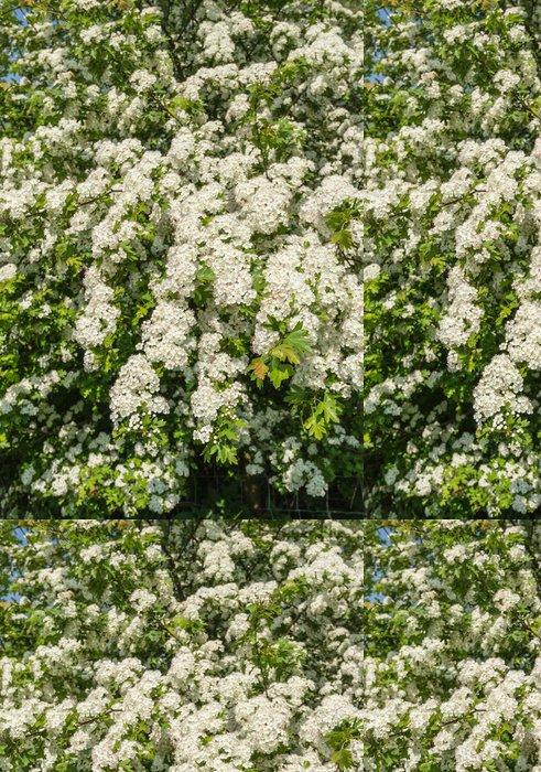 Tapeta Pixerstick Bíle kvetoucí keř hlohu v dubnu - Roční období