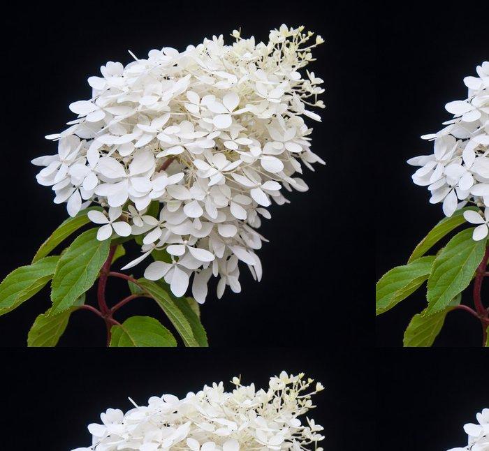 Tapeta Pixerstick Bíle kvetoucí rostliny Hydrangea Paniculata Phantom - Květiny