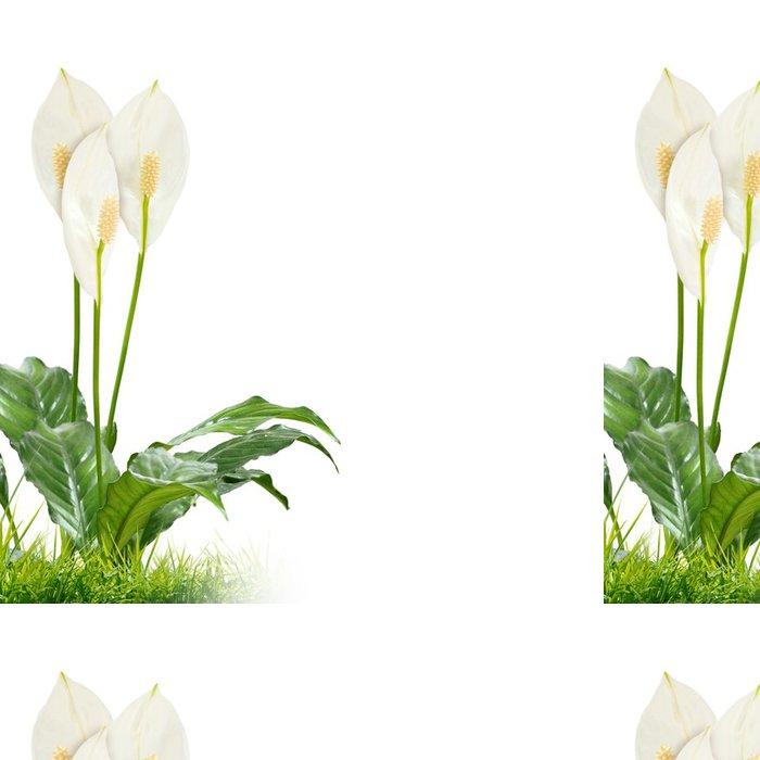 Tapeta Pixerstick Bílé květy na zeleném pozadí - Pozadí
