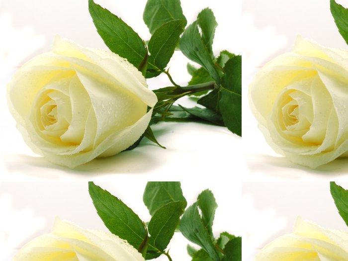 Tapeta Pixerstick Bílé růže - Témata