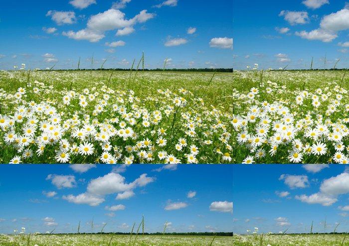 Tapeta Pixerstick Bílé sedmikrásky - Květiny