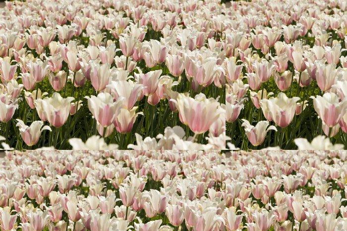 Tapeta Pixerstick Bílo-růžové tulipány - Květiny