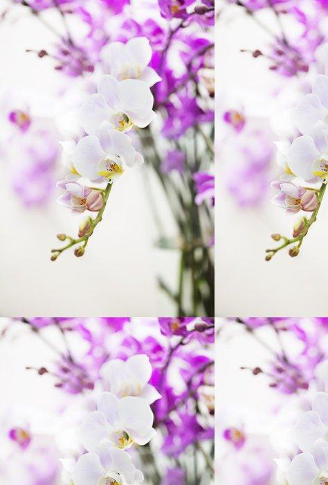 Tapeta Pixerstick Bílý Phalaenopsis orchidej květina větev - Domov a zahrada