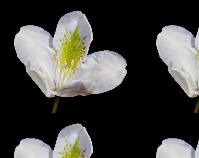 Tapeta Pixerstick Bílý rododendron květ - Květiny