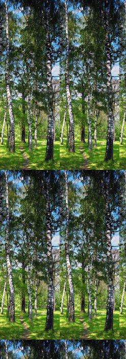 Vinylová Tapeta Birch les. Birch Grove. Bílá bříza kmeny - Témata