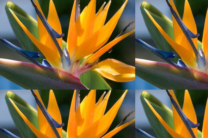 Tapeta Pixerstick Bird of paradise květiny - Květiny