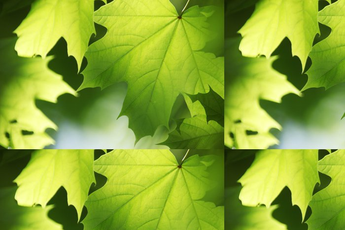Tapeta Pixerstick Blätter im sonnenlicht, AHORN - Stromy