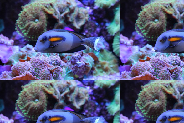 Tapeta Pixerstick Blue Fish - Ryby