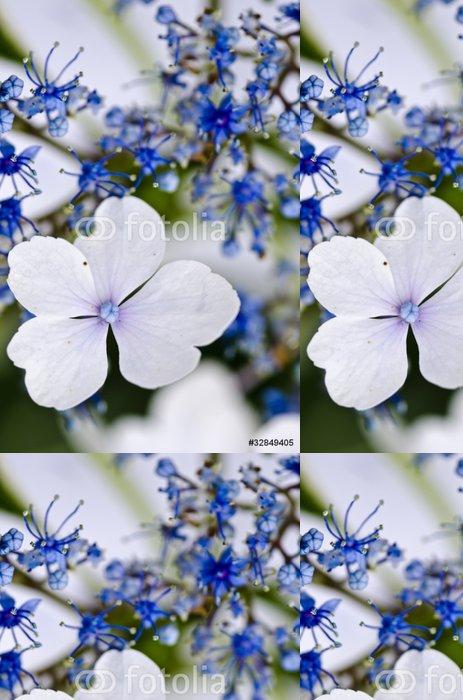 Tapeta Pixerstick Blue Lace-cap Hydrangea detailní - Květiny