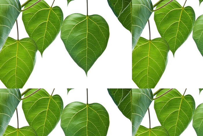 Tapeta Pixerstick Bodhi nebo Peepal list ze stromu Bodhi - Rostliny