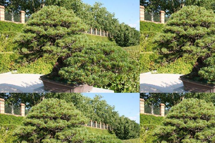 Tapeta Pixerstick Bonsai borovice drobnokvětá - Stromy