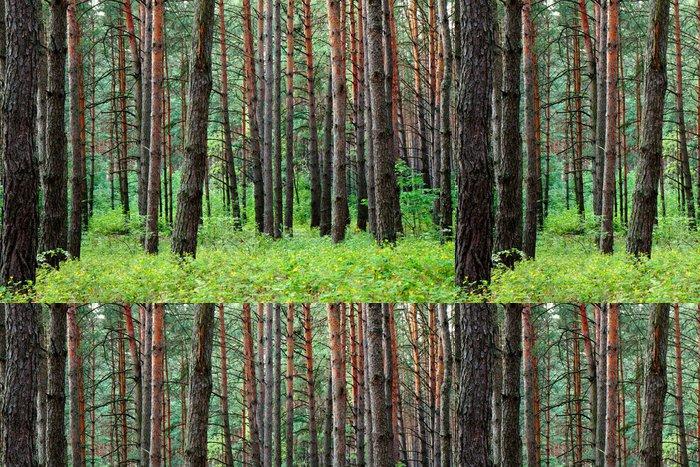 Tapeta Pixerstick Borovice lesní po letním dešti - Lesy