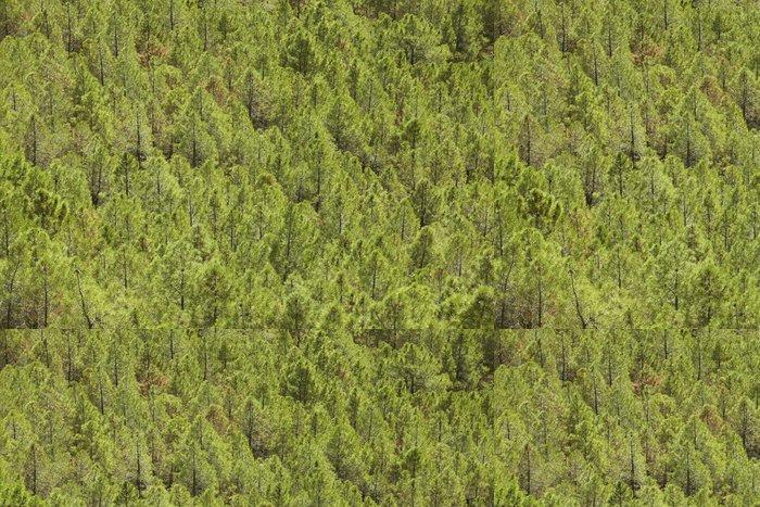 Tapeta Pixerstick Borovice lesní terén ve Španělsku. Teruel - Evropa