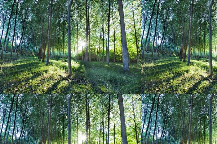 Tapeta Pixerstick Bosque verde - Lesy