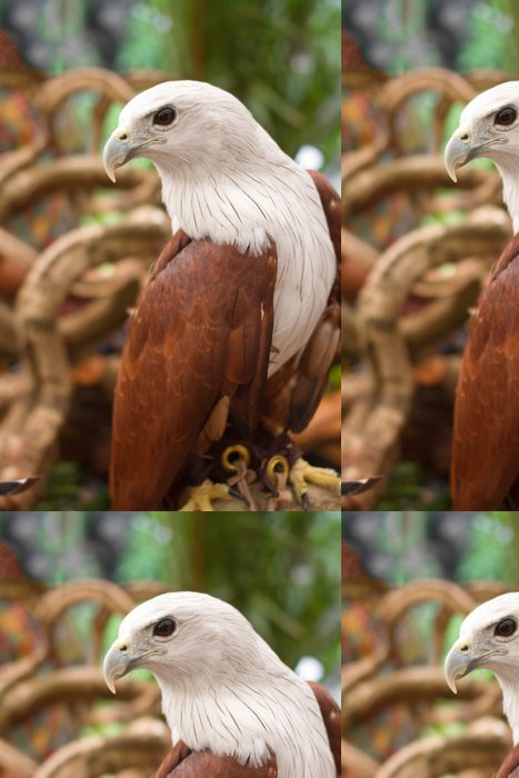 Tapeta Pixerstick Brahminy Kite, Red-couval Sea Eagle stojí na větvi - Témata