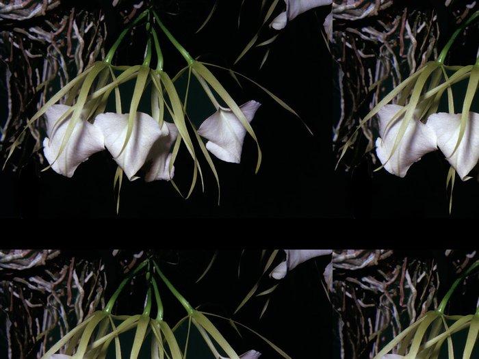 Vinylová Tapeta Brassavola nodosa - Květiny