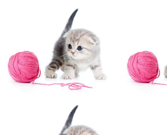 Vinylová Tapeta Britská dítě kočka si hraje červenou zámotek nebo míč na bílém - Savci