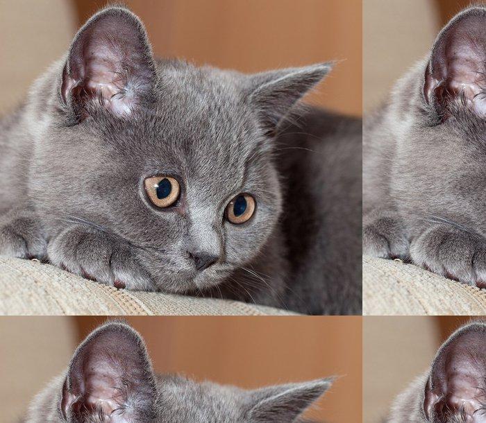 Vinylová Tapeta Britská kočka - Témata