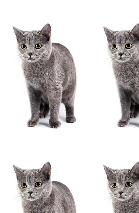 Tapeta Pixerstick Britská krátkosrstá kočka - Savci