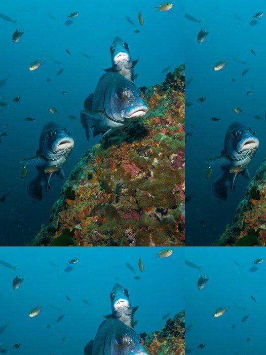 Tapeta Pixerstick Brown Chrochtalové - Plectorhinus gibbosus - Vodní sporty