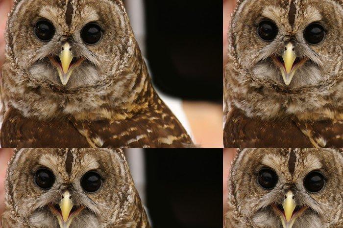 Tapeta Pixerstick Brown Owl - Ptáci