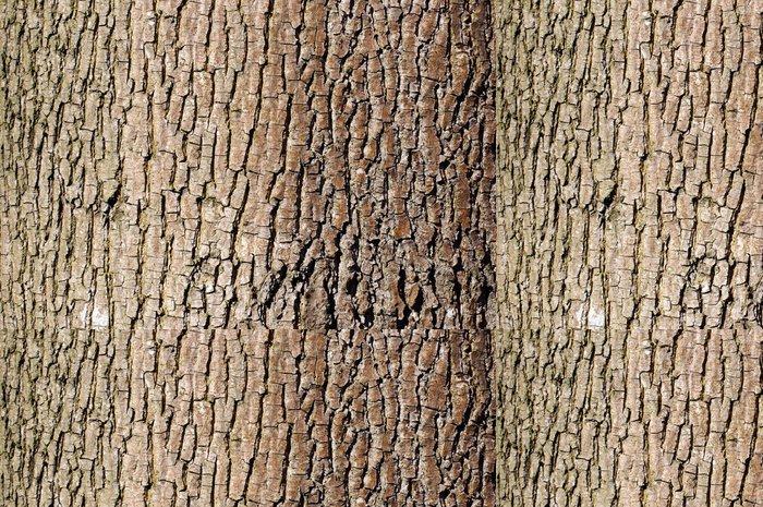 Tapeta Pixerstick Brown stromové kůry textury v orientaci na šířku - Abstraktní