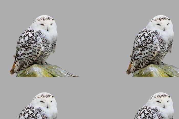 Tapeta Pixerstick Bubo scandiacus - Ptáci