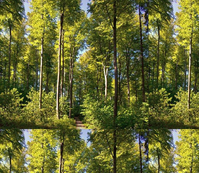 Tapeta Pixerstick Buk lesní - Přírodní krásy
