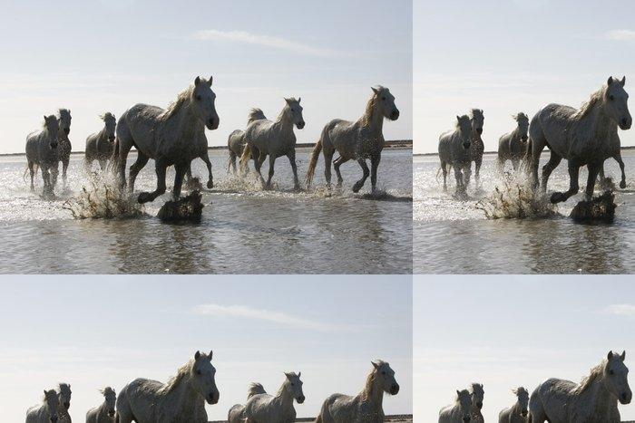 Tapeta Pixerstick Camargue Bílý kůň - Témata