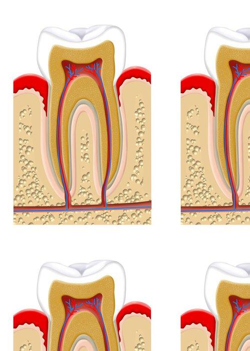 Tapeta Pixerstick Část zubu - Zdraví a medicína