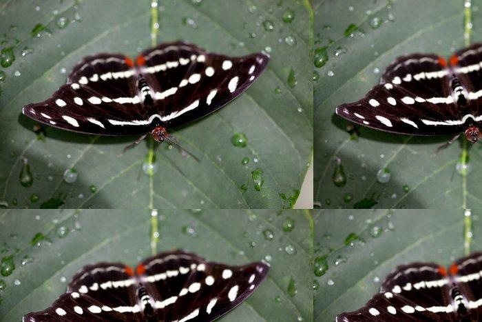 Tapeta Pixerstick Catonephele Orites - Orange-pruhovaný Shoemaker (female) 02 - Ostatní Ostatní