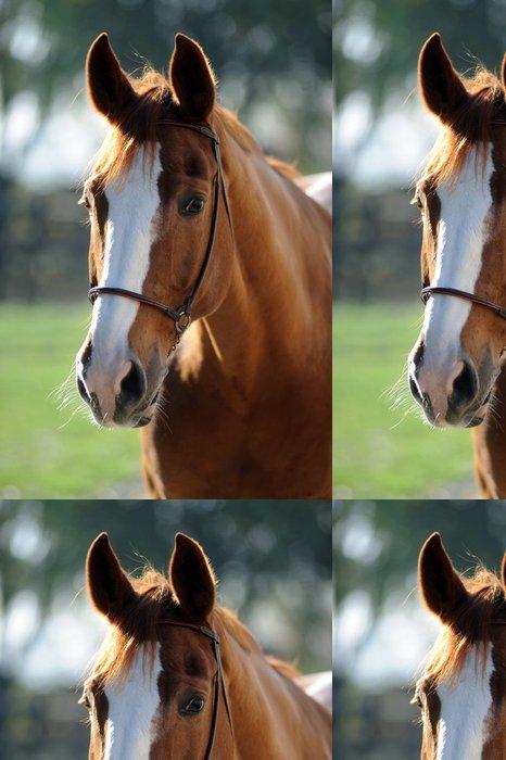 Tapeta Pixerstick Cavallo - Savci