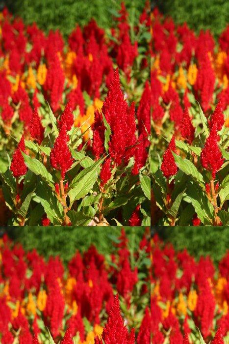 Tapeta Pixerstick Celosia květiny - Květiny