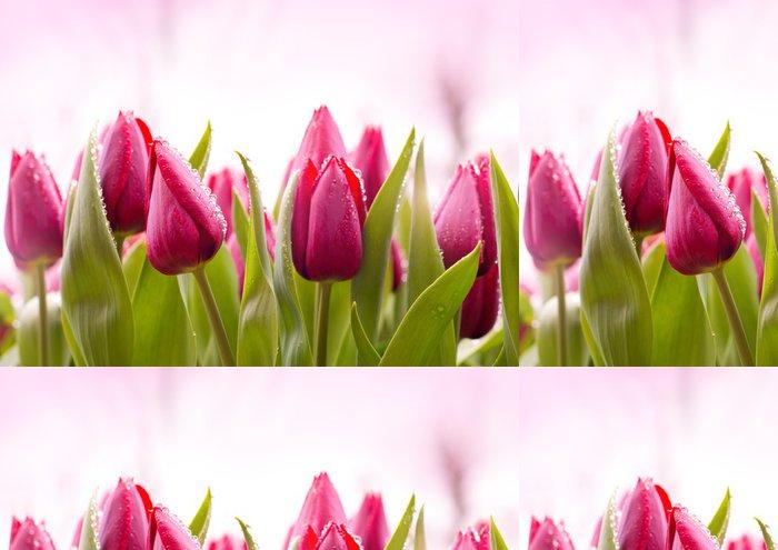 Tapeta Pixerstick Čerstvé tulipány kapkami rosy - Témata