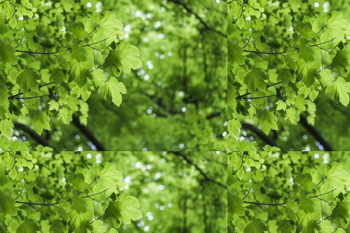 Tapeta Pixerstick Čerstvé zelené listy - javor - Témata