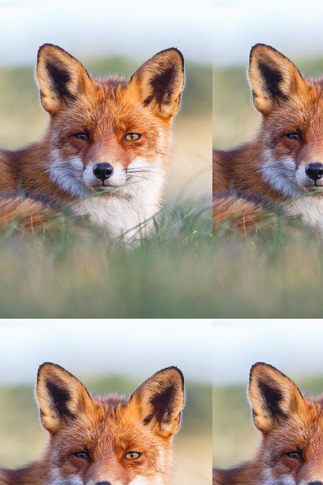 Tapeta Pixerstick Červená liška portrét - Savci