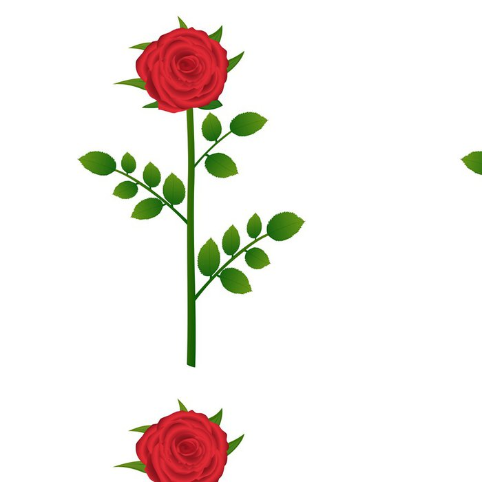 Tapeta Pixerstick Červená růže detailním na bílém pozadí - Květiny